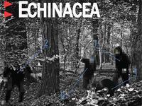 Najnowsza płyta Echinacei może być Twoja!